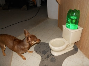 Roxi La Bow and the Toilet Bowl