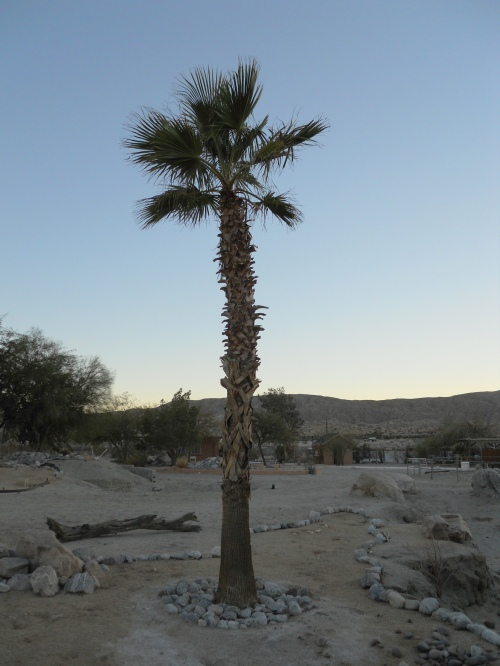 "Our camp site at the Lucky ""S "" Ranch, Palm Springs"